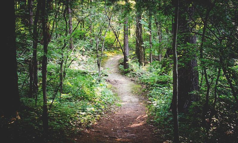 forest path meditation